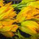 fiori_zucca