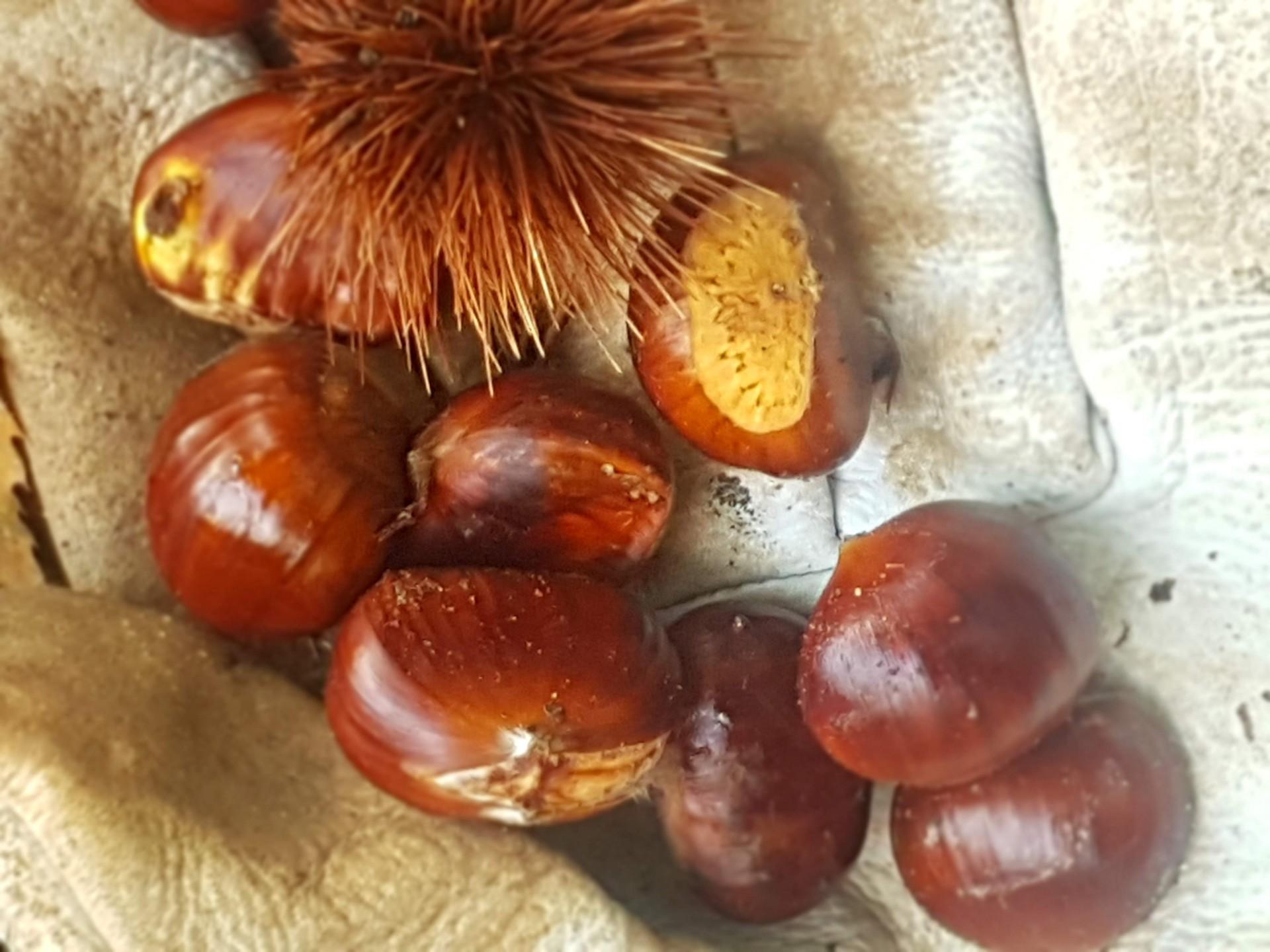 chestnutswood